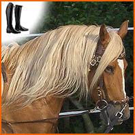 Travailler un cheval à la longe