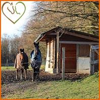 Bien loger son cheval pour veiller à son bien être