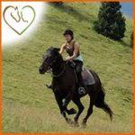 Le travail du cheval de loisir