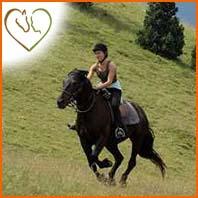 Le travail physique du cheval de loisir
