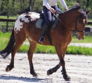 travail cheval loisir 4