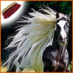 Entretenir la crinière de son cheval