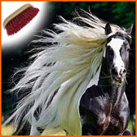 Entretenir la crinière du cheval