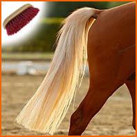 Entretenir la queue du cheval