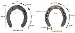 les différentes parties du fer à cheval