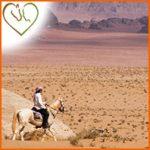 Comment protéger son cheval contre la chaleur l'été?