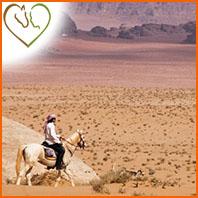Comment protéger son cheval contre la chaleur l'été
