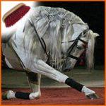 Tresser les crins de nos chevaux