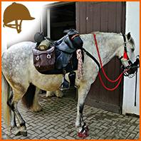 Comment bien ajuster le harnachement de son cheval