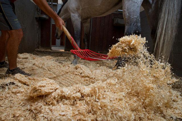 entretien de la litiere du boxe du cheval