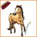Soins du cheval avant et après le travail